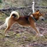 orokbefogadhato-kutyak-hajduszoboszlo-26