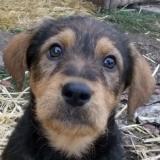 orokbefogadhato-kutyak-hajduszoboszlo-35