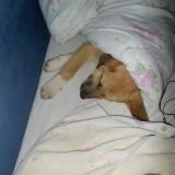 orokbefogadhato-kutyak-hajduszoboszlo-5