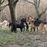 orokbefogadhato-kutyak-hajduszoboszlo-9