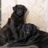 orokbefogadhato-kutyak-hajduszoboszlo-18