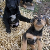 orokbefogadhato-kutyak-hajduszoboszlo-33