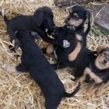 orokbefogadhato-kutyak-hajduszoboszlo-34