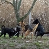 orokbefogadhato-kutyak-hajduszoboszlo-8