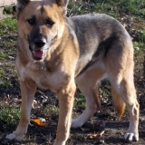 kutya-orokbefogadas-hajduszoboszlo-2017-november-10