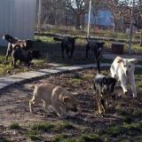 kutya-orokbefogadas-hajduszoboszlo-2017-november-118