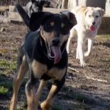 kutya-orokbefogadas-hajduszoboszlo-2017-november-121