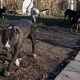 kutya-orokbefogadas-hajduszoboszlo-2017-november-129