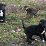 kutya-orokbefogadas-hajduszoboszlo-2017-november-136