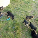 kutya-orokbefogadas-hajduszoboszlo-2017-november-153