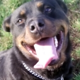 kutya-orokbefogadas-hajduszoboszlo-2017-november-158