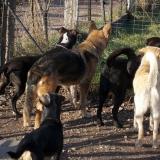 kutya-orokbefogadas-hajduszoboszlo-2017-november-18