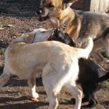 kutya-orokbefogadas-hajduszoboszlo-2017-november-2
