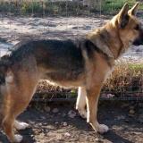 kutya-orokbefogadas-hajduszoboszlo-2017-november-21