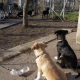 kutya-orokbefogadas-hajduszoboszlo-2017-november-26