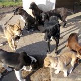 kutya-orokbefogadas-hajduszoboszlo-2017-november-28