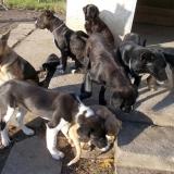kutya-orokbefogadas-hajduszoboszlo-2017-november-30
