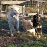 kutya-orokbefogadas-hajduszoboszlo-2017-november-38