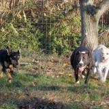 kutya-orokbefogadas-hajduszoboszlo-2017-november-39