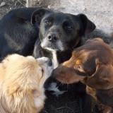 kutya-orokbefogadas-hajduszoboszlo-2017-november-43