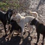 kutya-orokbefogadas-hajduszoboszlo-2017-november-44