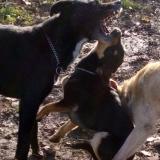 kutya-orokbefogadas-hajduszoboszlo-2017-november-45