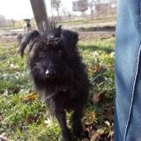 kutya-orokbefogadas-hajduszoboszlo-2017-november-49