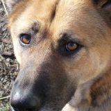 kutya-orokbefogadas-hajduszoboszlo-2017-november-50