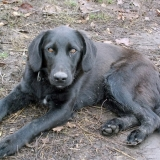 kutya-orokbefogadas-hajduszoboszlo-2017-november-58