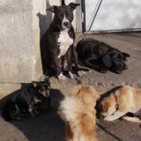 kutya-orokbefogadas-hajduszoboszlo-2017-november-6
