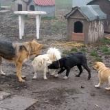 kutya-orokbefogadas-hajduszoboszlo-2017-november-60