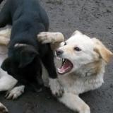 kutya-orokbefogadas-hajduszoboszlo-2017-november-70