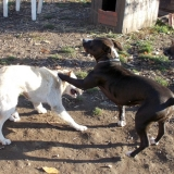 kutya-orokbefogadas-hajduszoboszlo-2017-november-9