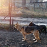 kutya-orokbefogadas-hajduszoboszlo-2017-november-99