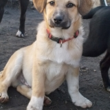 kutya-orokbefogadas-hajduszoboszlo-2017-november-105