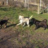 kutya-orokbefogadas-hajduszoboszlo-2017-november-119