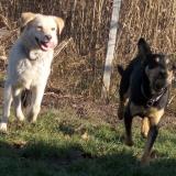kutya-orokbefogadas-hajduszoboszlo-2017-november-120
