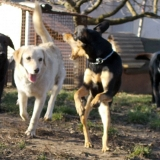 kutya-orokbefogadas-hajduszoboszlo-2017-november-122