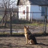 kutya-orokbefogadas-hajduszoboszlo-2017-november-124