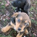 kutya-orokbefogadas-hajduszoboszlo-2017-november-133
