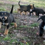 kutya-orokbefogadas-hajduszoboszlo-2017-november-134