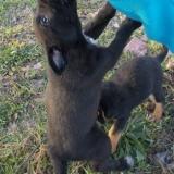 kutya-orokbefogadas-hajduszoboszlo-2017-november-142