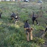 kutya-orokbefogadas-hajduszoboszlo-2017-november-143