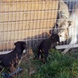kutya-orokbefogadas-hajduszoboszlo-2017-november-148