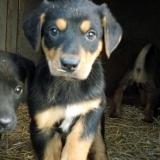 kutya-orokbefogadas-hajduszoboszlo-2017-november-151