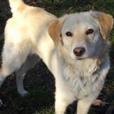 kutya-orokbefogadas-hajduszoboszlo-2017-november-36