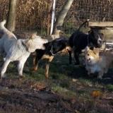 kutya-orokbefogadas-hajduszoboszlo-2017-november-37