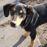 kutya-orokbefogadas-hajduszoboszlo-2017-november-4