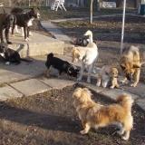 kutya-orokbefogadas-hajduszoboszlo-2017-november-41