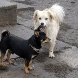 kutya-orokbefogadas-hajduszoboszlo-2017-november-62